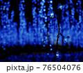青く輝く青い大藤 76504076