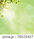 さわやかな緑と木漏れ日の背景 - 複数のバリエーションがあります 76525427