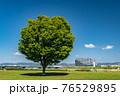 春の淀川河川公園枚方地区 76529895