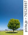 春の淀川河川公園枚方地区 76529897