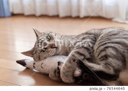 ぬいぐるみで遊ぶ猫  サバトラ猫 76544640
