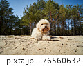 cute little dog is playing on the sand in the forest 76560632