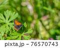 緑の葉の上で翅を休めるベニシジミ  76570743