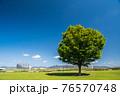春の淀川河川公園枚方地区 76570748