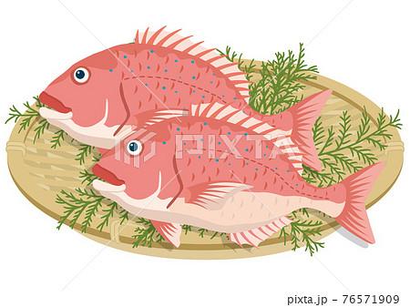 ザル盛りの鯛(2匹) 76571909