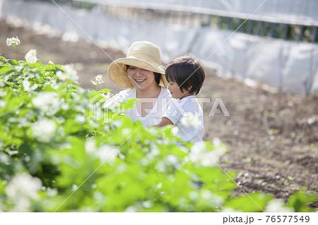 畑で遊ぶ、農家の親子 76577549