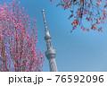 春の東京の風景 スカイツリーと桜 76592096
