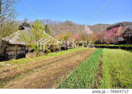 黒川温泉春風景 春イメージ風景 和風イメージ風景 熊本県南小国町  76604717