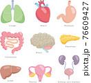 人体の内臓各種。肺、心臓、胃、腸、体、脳、膵臓、肝臓、子宮、腎臓、膀胱。 76609427