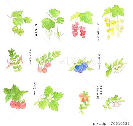 ベリーの花と実水彩セット 76610585