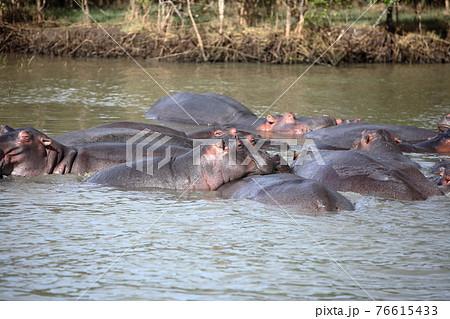 南アフリカ シュシュリー野生動物園 76615433
