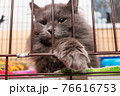 The grate of the cage through which the locked cat peeps. Animals in shelters 76616753