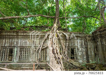 ベンメリア【カンボジア】 76625833