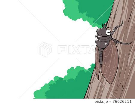 木に停まるアブラゼミのイラスト 76626211