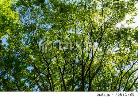 生き生きとした木の葉の間から見える輝く太陽と青い空 76631739