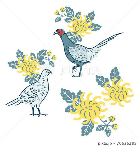 雉と菊のイラスト 76636285