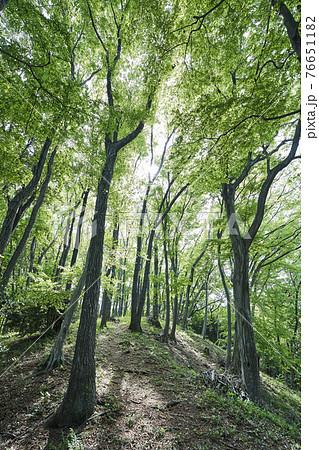 町田薬師池公園の雑木林 76651182