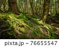 (山梨県)青木ヶ原樹海の苔と木の根っこ 76655547