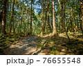 (山梨県)青木ヶ原樹海の遊歩道と木々 76655548