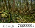 (山梨県)青木ヶ原樹海の木々、深い森の奥 76655551