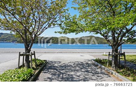 青空と新緑の風景(ウチノ海公園) 76663725