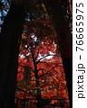 室生寺の風景 76665975