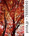 室生寺の風景 76666040