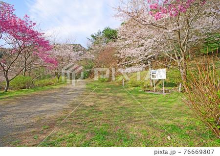 福岡県みやこ町の桜スポット味見桜公園 76669807