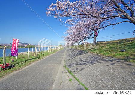 福岡県行橋市の今川河川敷のさくらみちと竹灯篭 76669829
