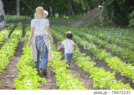 畑の畝を歩いていく、農家の親子 76672235