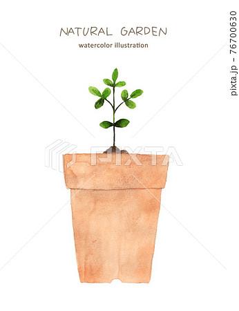 鉢植えの水彩画 76700630