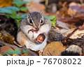 ドングリを食べるシマリス 76708022