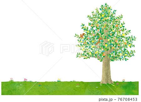 樹と鳥のイラスト 76708453