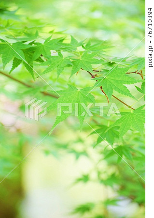 新緑の葉 76710394
