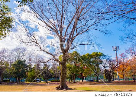 晴れ渡った青空の下の木に囲まれた公園 76711878