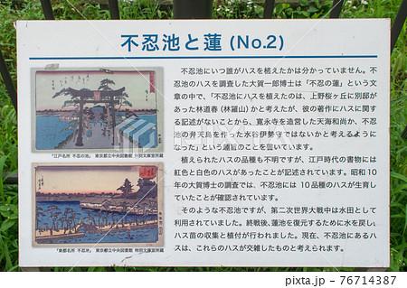 上野 不忍池 蓮の季節 76714387