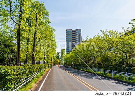 春の青空と新緑の街路樹が並ぶ広い道路 76742821