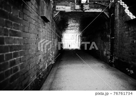 トンネルの向こうから駆け寄ってくる猫 76761734