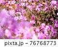 つつじの花 76768773