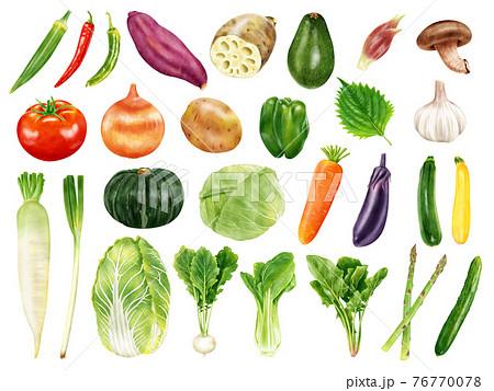 水彩イラスト 野菜セット 76770078