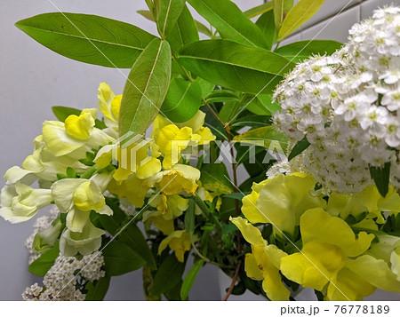 室内に飾ったキンギョソウとコデマリの生け花 76778189