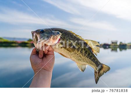 野池で釣ったブラックバス 76781838