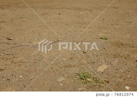 枝や葉がぽつぽつと落ちている土の地面 76812074