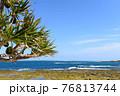 アダンの木と引潮の海 76813744