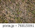 冬の枯れた芝生を上から撮影 76815091