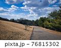 公園の一本道と芝生と空と雲と木々のコラボレーション 76815302
