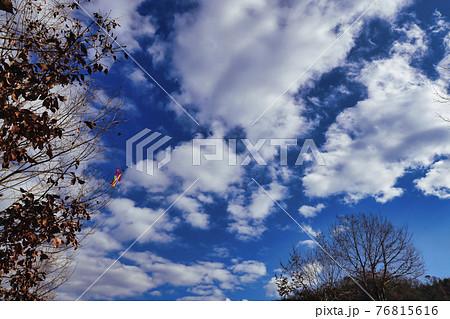 冬の晴空と枯れた木に絡まった凧を撮影 76815616