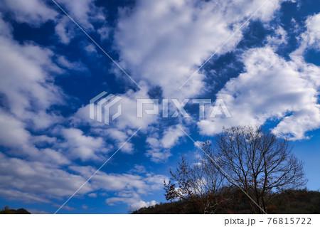 冬の晴空と木々を見上げてように撮影 76815722
