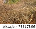 冬の公園で見つけた木の複雑に絡み合う枝を撮影 76817366