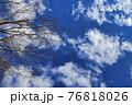 冬晴れの空と枯れ木のコラボレーション 76818026